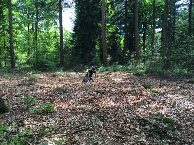 900 bomen geplant